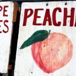 peachessign