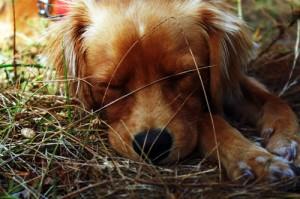 Sleepy Camper