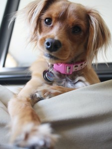 Hayley's Sweet Stare