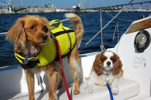 Sailing Puppies